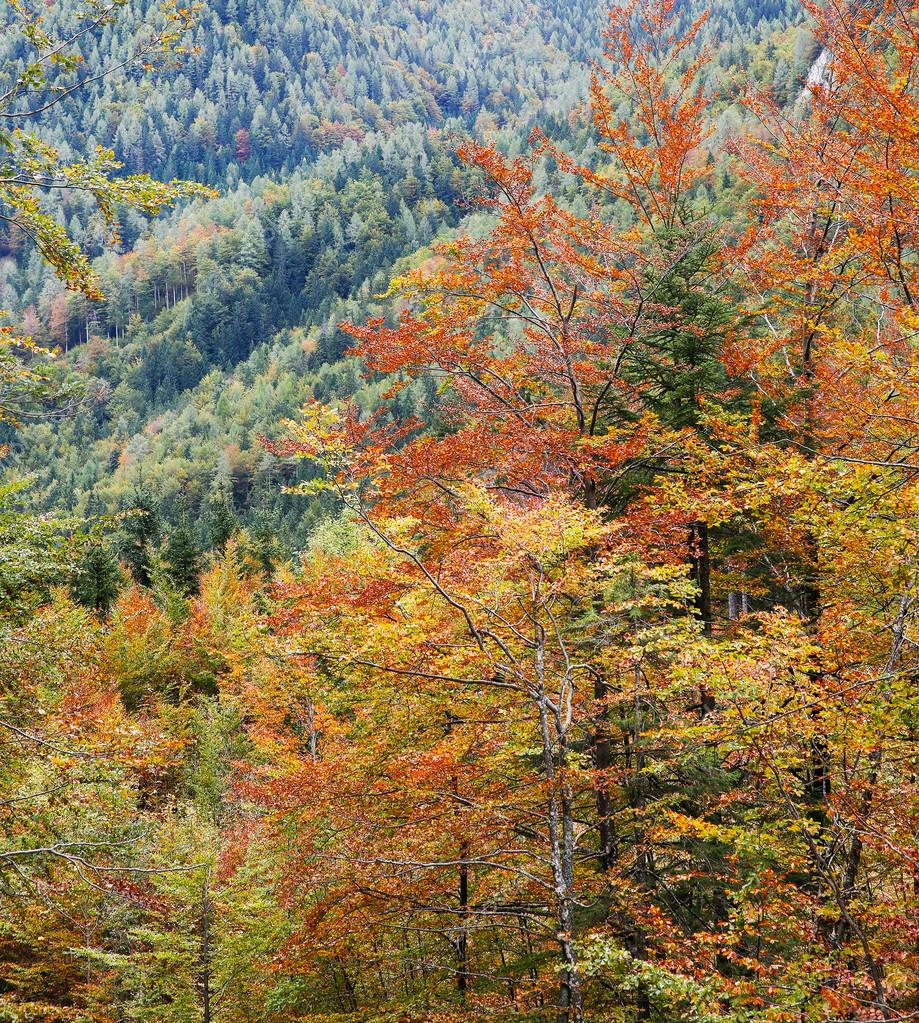 Deciduous forest in autumn colors ⬇ Stock Photo, Image by © zlikovec  #84307414