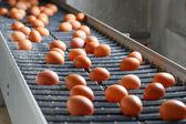 Fényképek Friss, nyers csirke tojás egy futószalagon