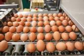 Fényképek Automatikus rendezés a nyers és friss csirke tojás