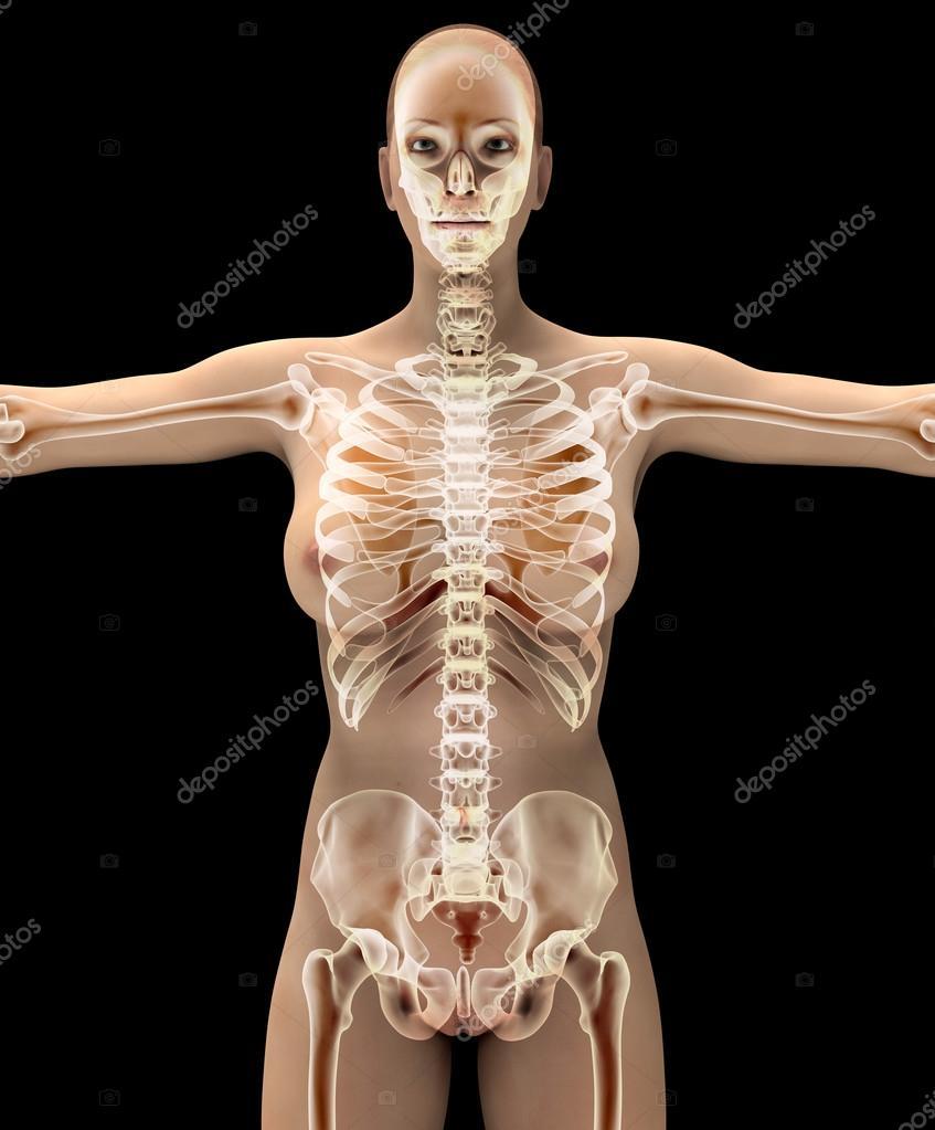 Anatomie einer Frau auf schwarz mit Beschneidungspfad — Stockfoto ...
