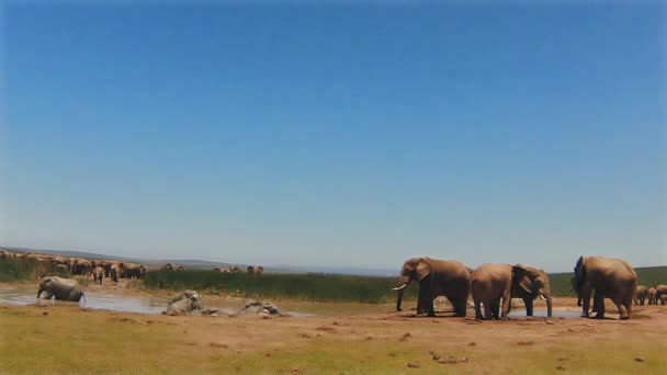 Elefántok pocsolya