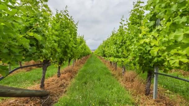 Vineyard field moving