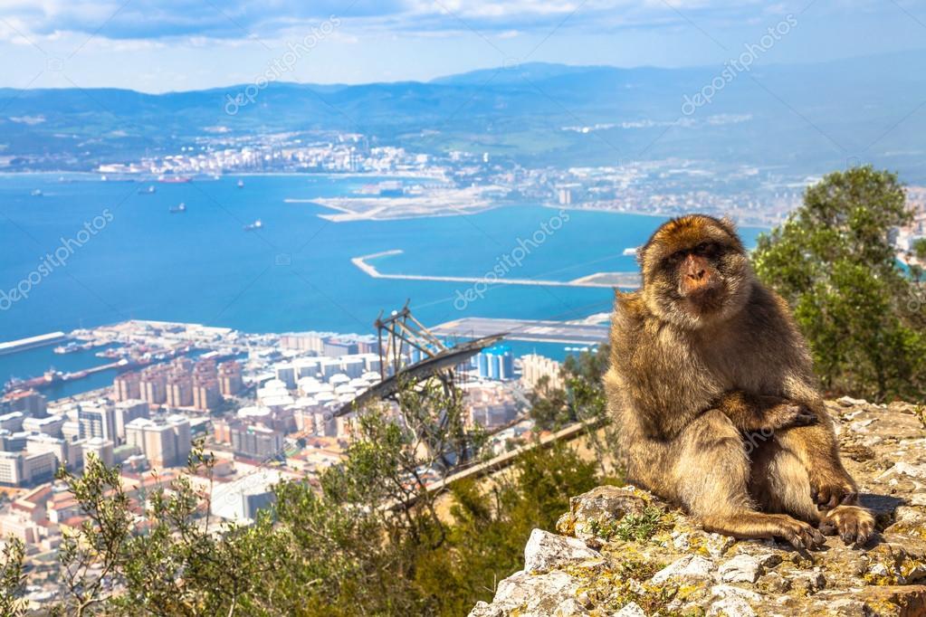 Gibraltar Affen