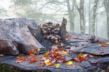 Mushrooms On Dead Wood In Nebrodi Park, Sicily
