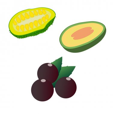 Jackfruit, feijoa and acai isolated on white background. Editable and design suitable vector illustration.