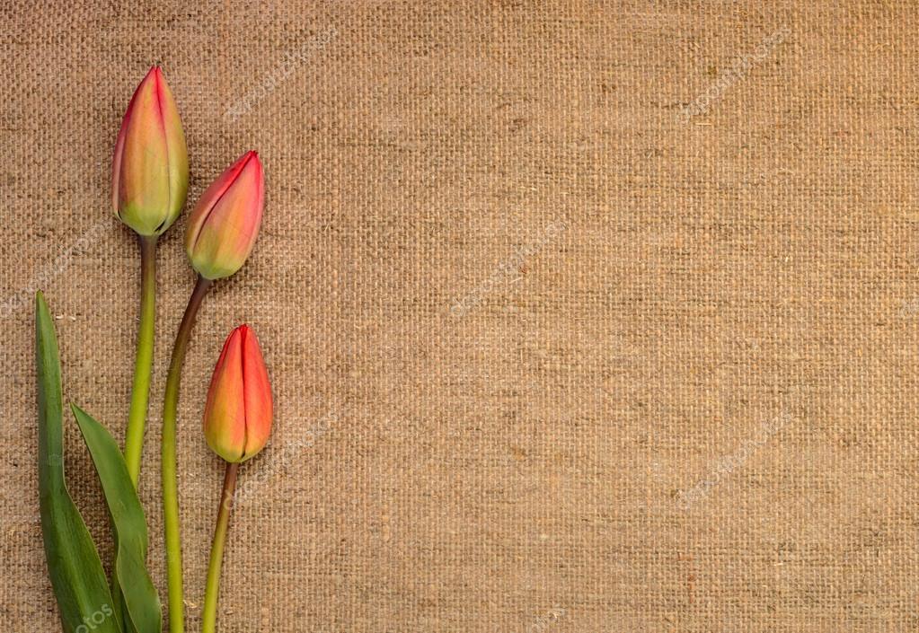 Marco de tulipanes sobre fondo de arpillera — Fotos de Stock ...