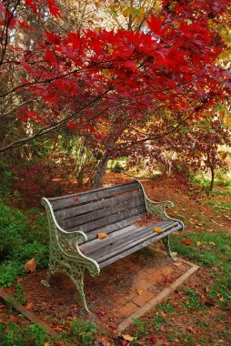 Single autumn park bench