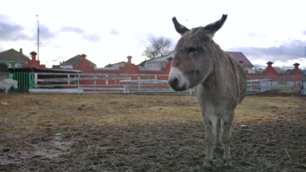 donkey stay and show affection