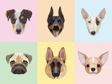 Dog breeds portraits