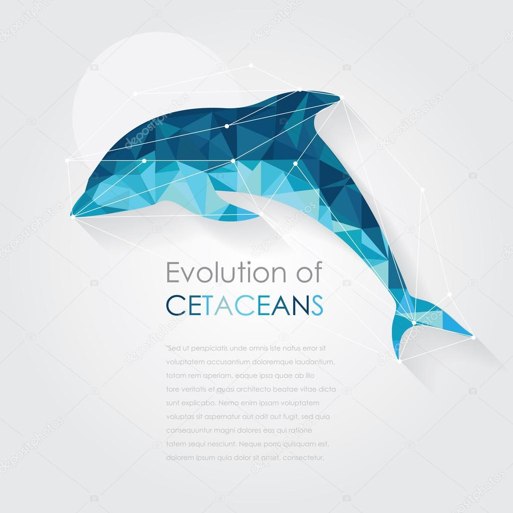 Dolphin anatomy in low art style — Stock Vector © DianaHlevnjak ...