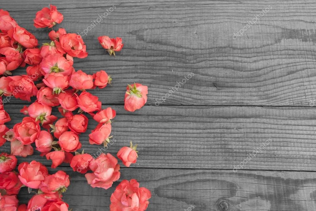Red roses on wooden background, black and white effect