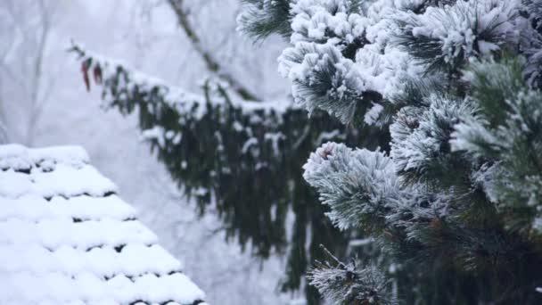 Zimní sněžení zasněžené jedle a střeše