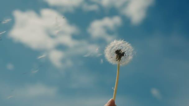 dívka foukání na Pampeliška na pozadí oblohy