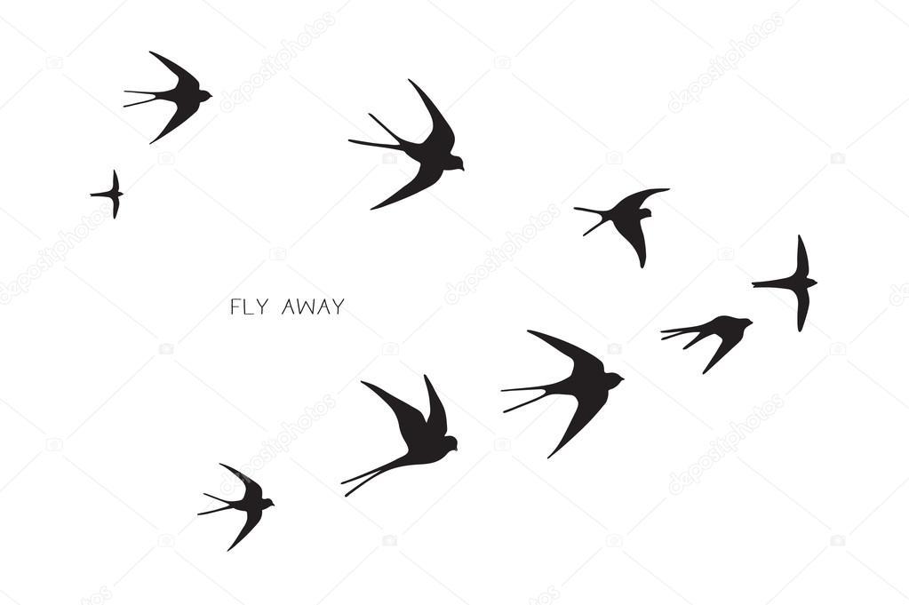 стая птиц силуэт ласточка