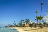 Fotografie Tall exotic palm tree