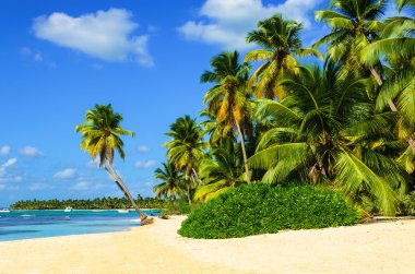 Amazing tropical beach with palm tree