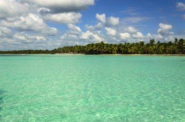 Palm trees over stunning lagoon