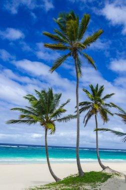 Three palms on the exotic beach