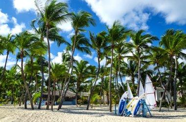Surfboards on Caribbean beach