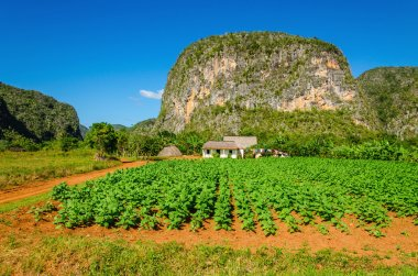Typical view of Valle de Vinales