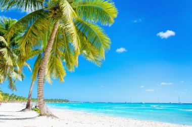 Caribbean beach with exotic palm trees