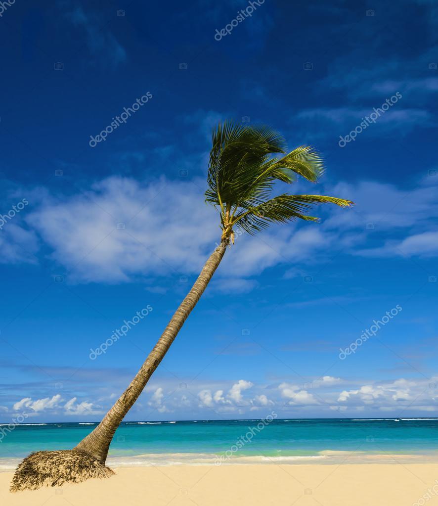 Exotic palm tree on  beach