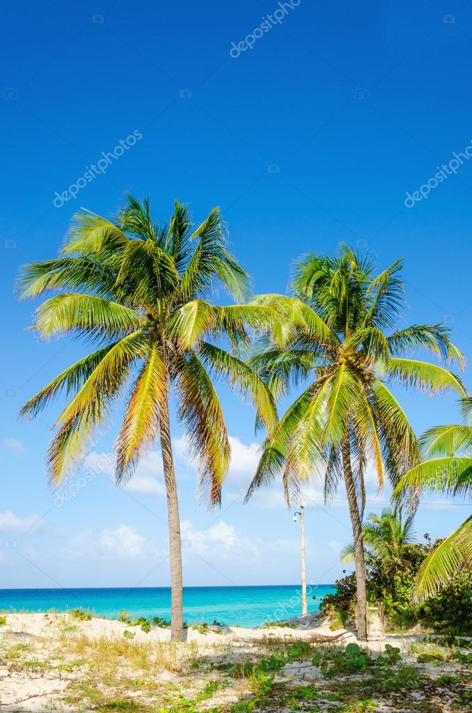 Amazing sandy beach with palm trees