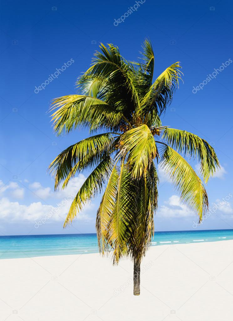Beach with beautiful high palm tree