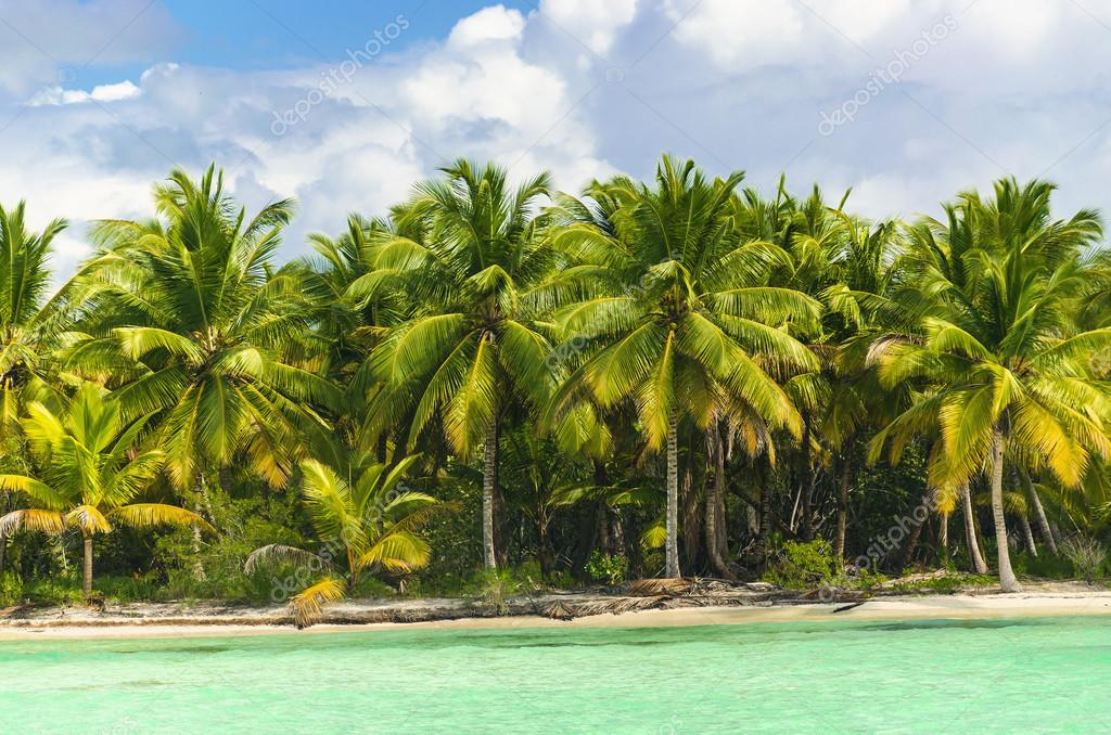 Palm trees over stunning lagoon