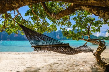 Hammock hanging under exotic tree on beach