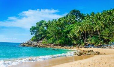 Quiet paradise beach palm trees, Thailand