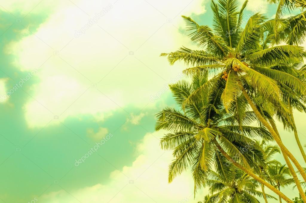 Ssandy beach with coconut palm
