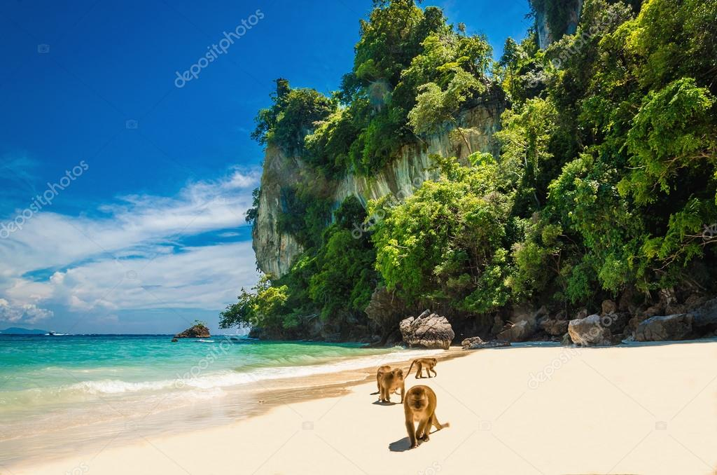 Monkeys waiting for food in Monkey Beach, Thailand