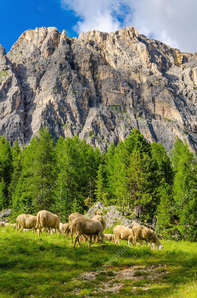 Gregge di pecore in pascolo ai piedi dolomiti foto for Piani di fattoria di 2000 piedi quadrati