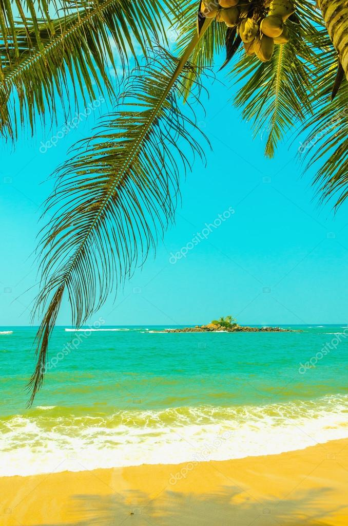Amazing sandy beach with coconut palm