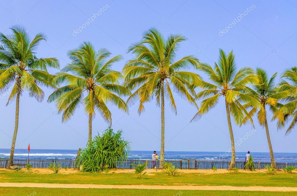 Amazing sandy beach with coconut palms