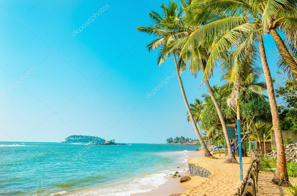 Beautiful paradise beach with tall palm trees