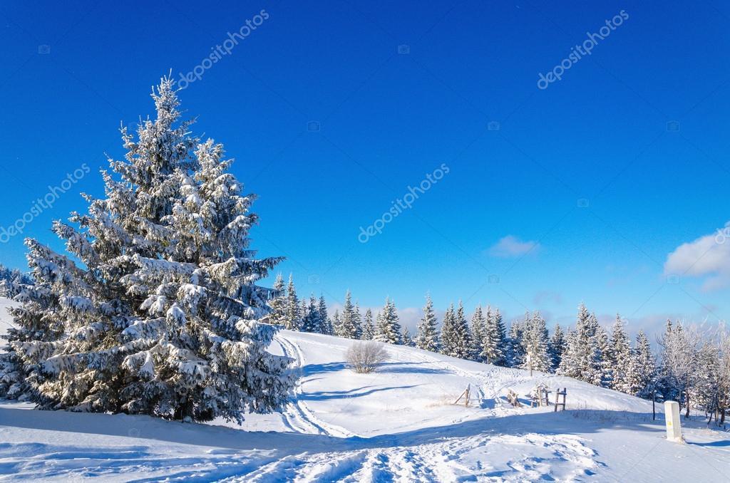 Paesaggio di montagna inverno con un sacco di neve alberi for Immagini inverno sfondi