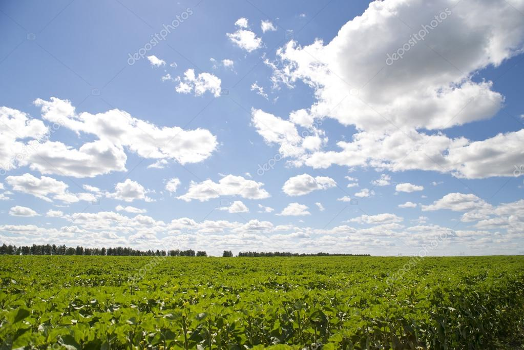 Фотообои Beautiful fresh green field and sunny sky