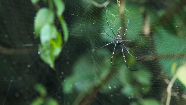 velký pavouk na webu