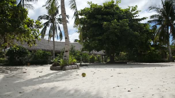 young girl playing with coconut