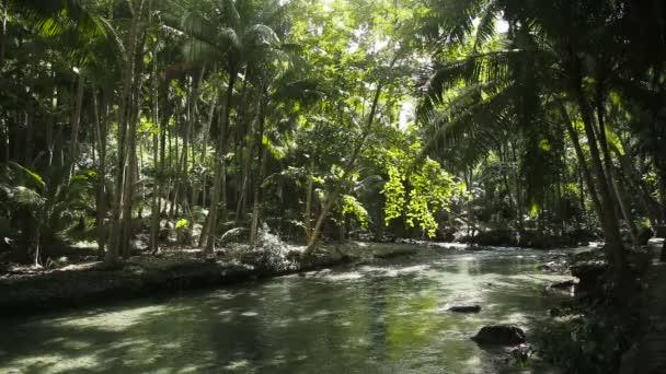 River in the rainforest in Cebu Philippines