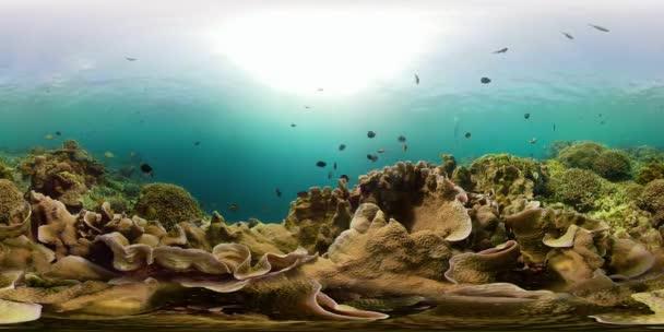 Korallzátony és trópusi halak víz alatt 360VR. Camiguin, Fülöp-szigetek
