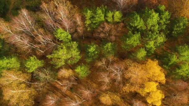 Barevné podzimní barvy v lesní podobě nahoře, zachycené dronem.