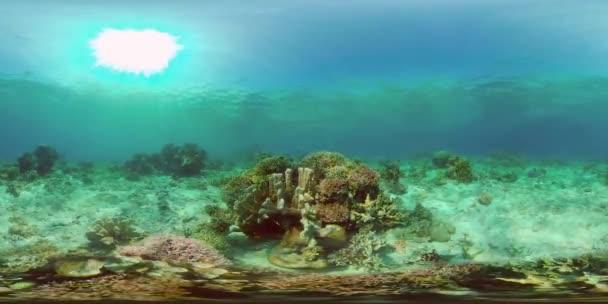 Korallzátony halakkal a víz alatt. Fülöp-szigetek. Virtuális valóság 360