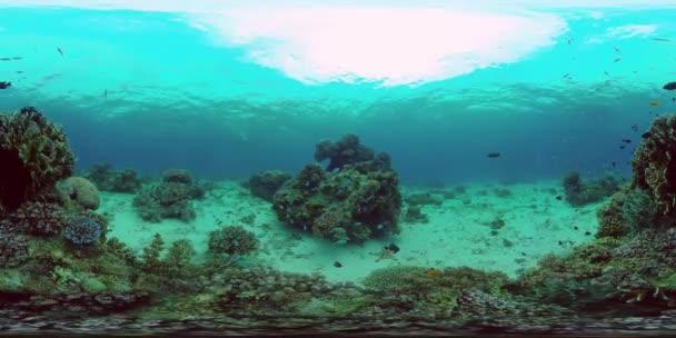 Korallzátony és trópusi halak. Fülöp-szigetek. 360 fokos nézet.
