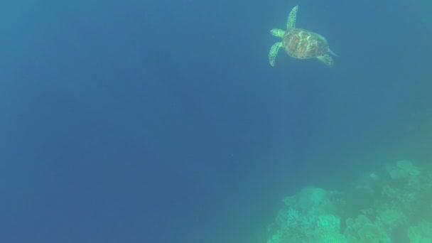 Sea turtle in Philippine Sea