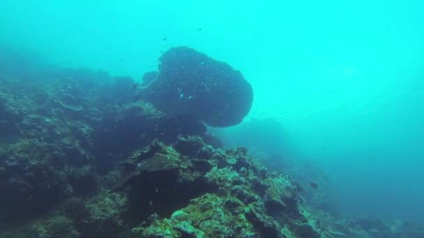 Coral Reef and Tropical Fish in Philippines