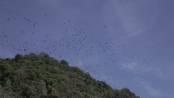 fliegende Füchse auf Boracay