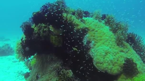 Korálový útes a tropických ryb v Filipínách